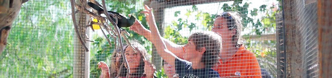 Niños admirando un ave junto a una educadora del Parque Oasys MiniHollywoodVisitas Guiadas