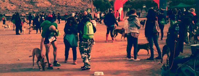 Carrera de perros desierto