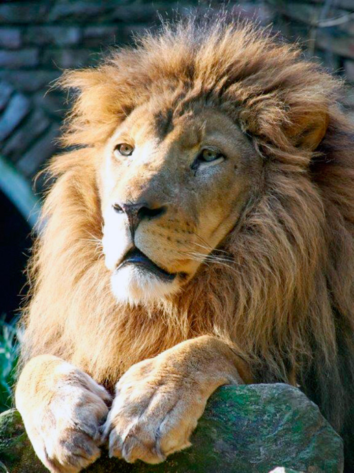 León Tonga tomando un poco de sol