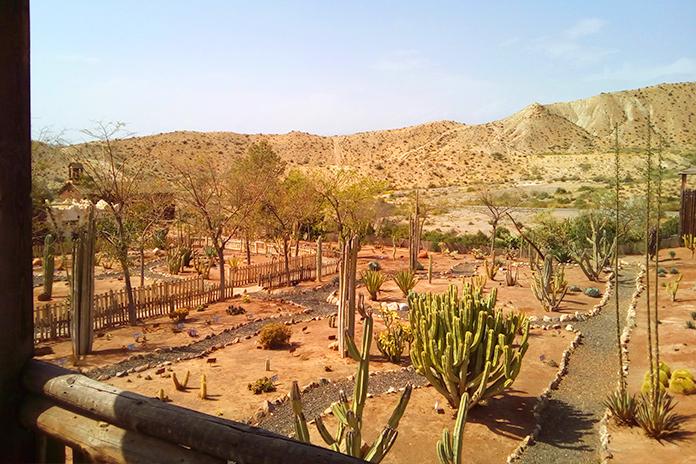 Imagen general del Jardín de Cactus de Oasys MiniHollywood