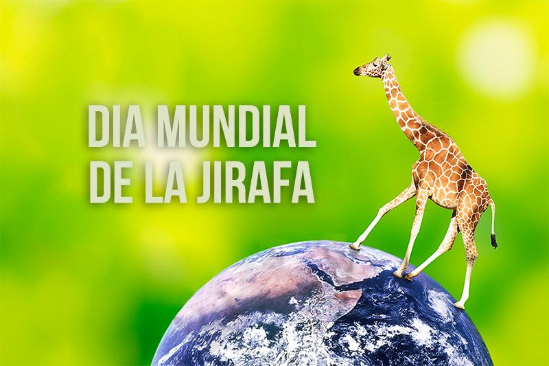 dia-mundial-jirafa-800x533.jpg