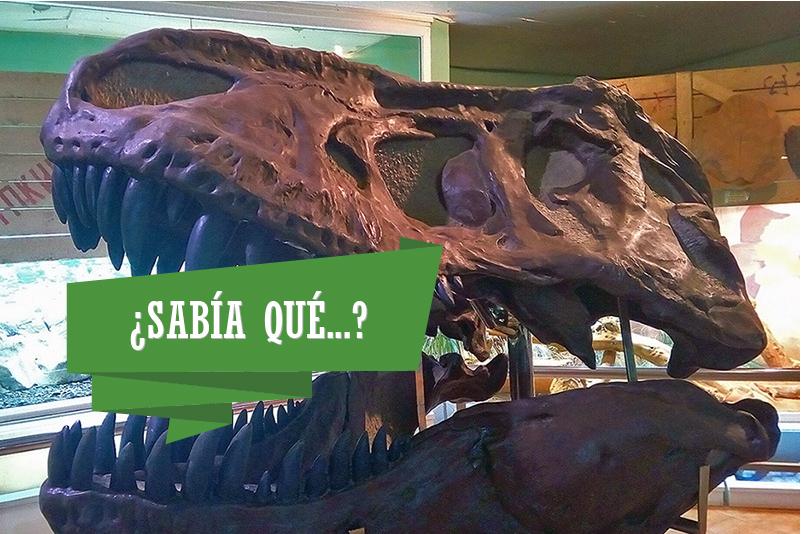 sabia_que_t-rex-800x533.jpg