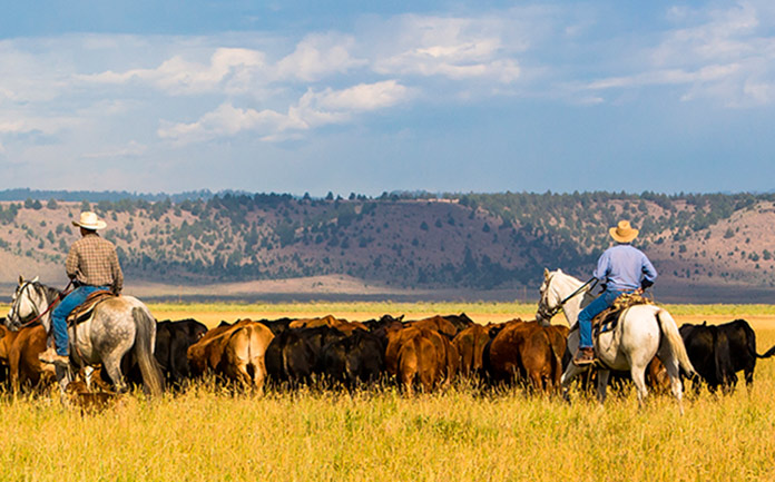 Vaqueros americanos