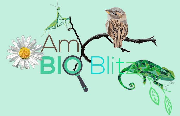 logo-ambioblitz-web.jpg