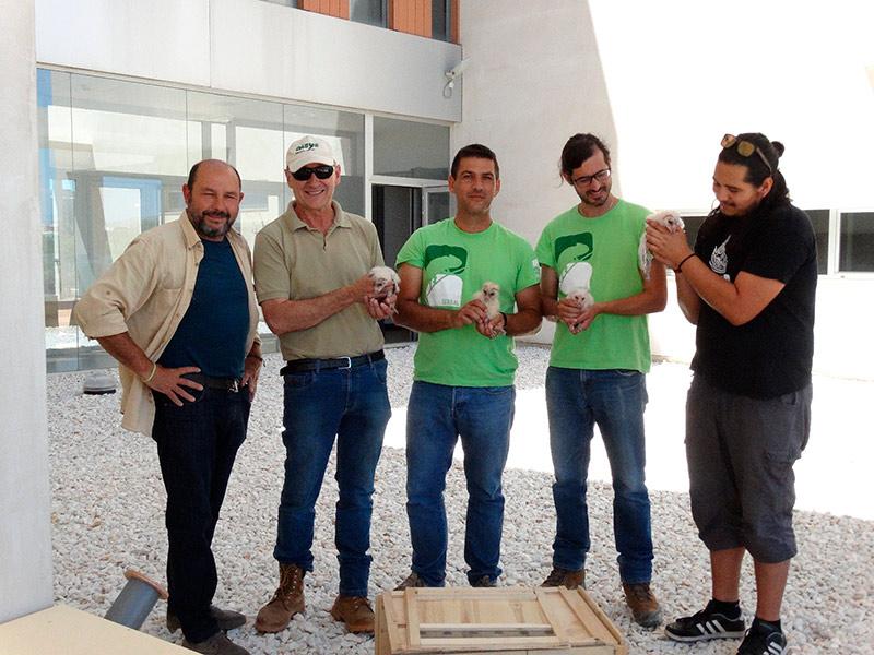 campaña de protección de la lechuza común en Almería