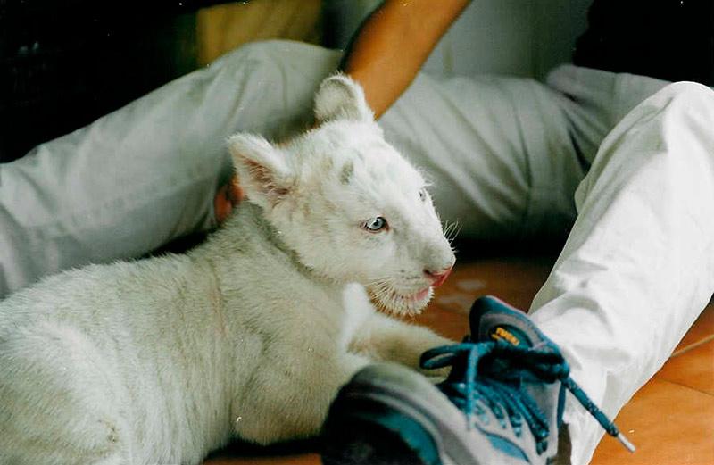 Blanco cachorro