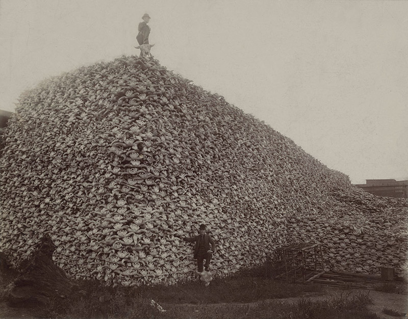 Exterminio de búfalos