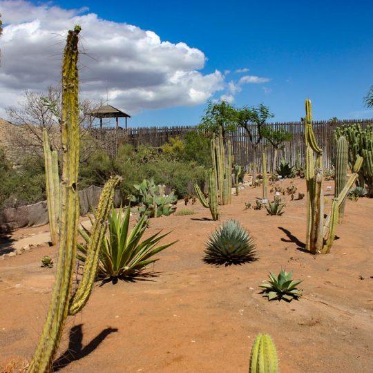 Oasys MiniHollywood Jardín Cactus 1